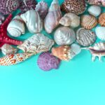 Muscheln, Foto Thanks for your Like • donations welcome auf Pixabay
